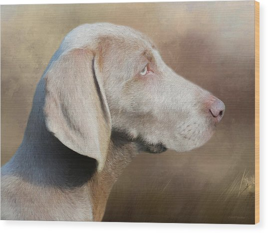 Weimaraner Adult - Painting Wood Print