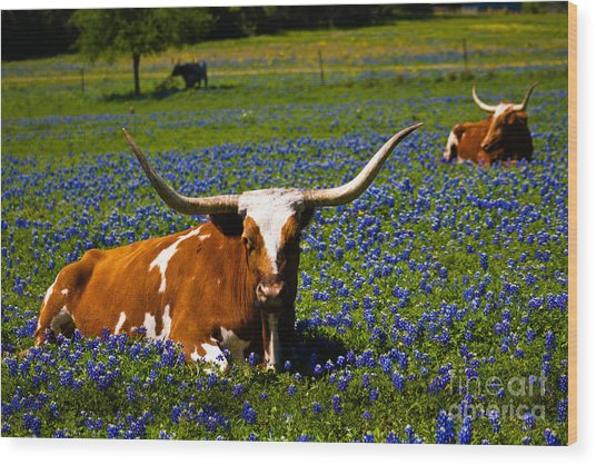 Welcome To Texas Wood Print by John Stanisich