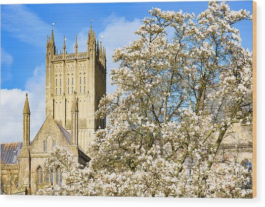Wells Cathedral And Spring Blossom Wood Print