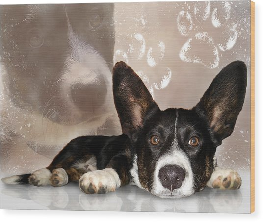 Welsh Corgi Cardigan Wood Print