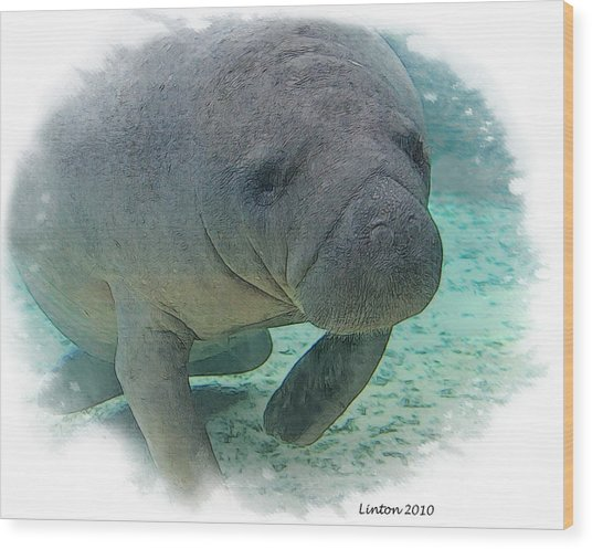 West Indian Manatee Wood Print