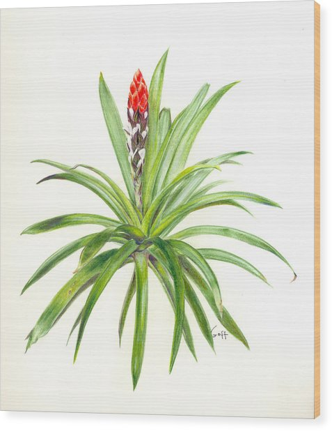 West Indian Tufted Air Plant Wood Print