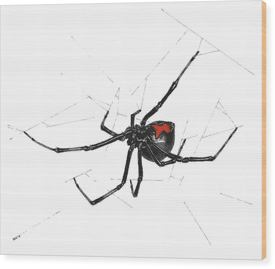 Western Black Widow - Color Wood Print