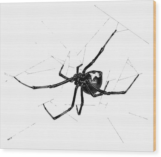 Western Black Widow Wood Print