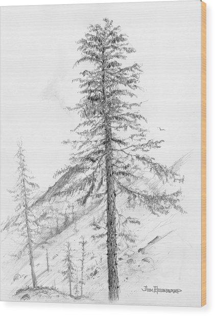 Western Hemlock Wood Print