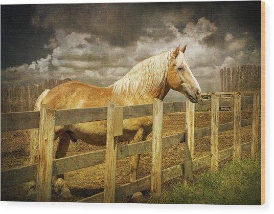 Western Horse In Alberta Canada Wood Print