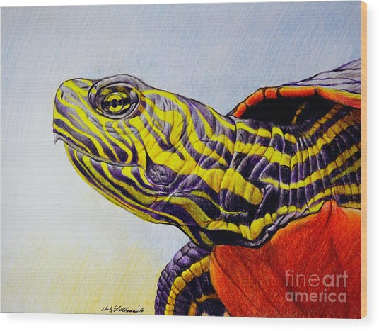 Western Painted Turtle Wood Print