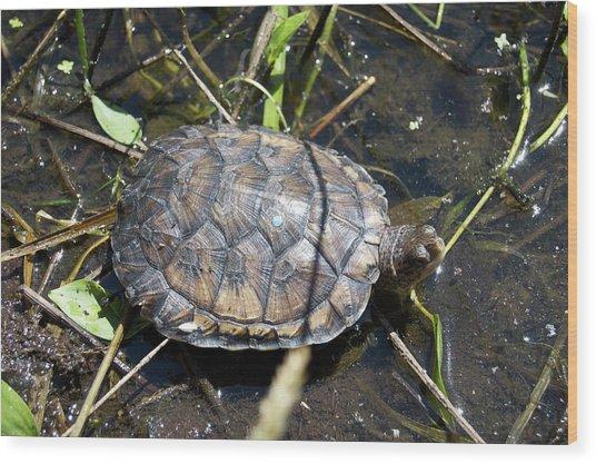 Western Pond Turtle, Actinemys Marmorata Wood Print