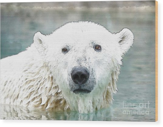 Wet Polar Bear Wood Print