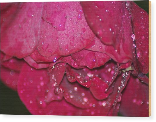 Wet Rose Wood Print by Heather Green