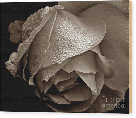 Wet Rose In Sepia Wood Print