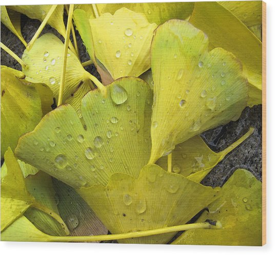Wet Yellow Leaves 2 Wc  Wood Print by Lyle Crump