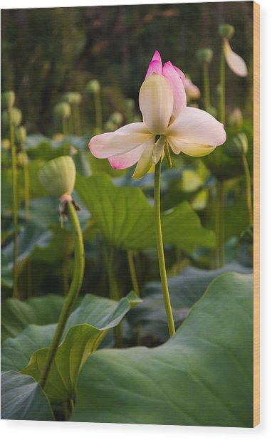 Wetland Flowers Wood Print