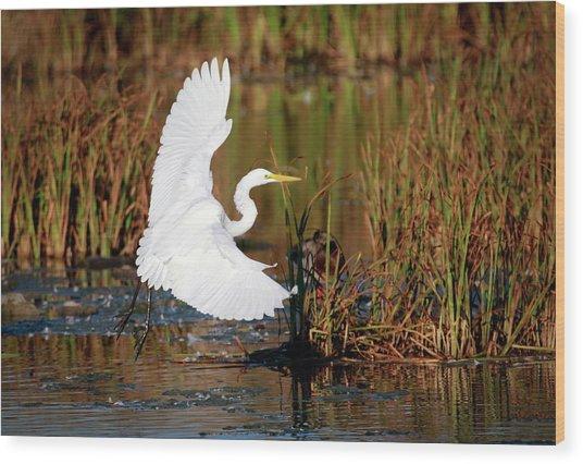 Wetland Landing Wood Print