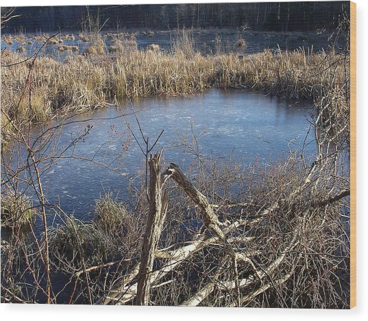 Wetland Pond Wood Print