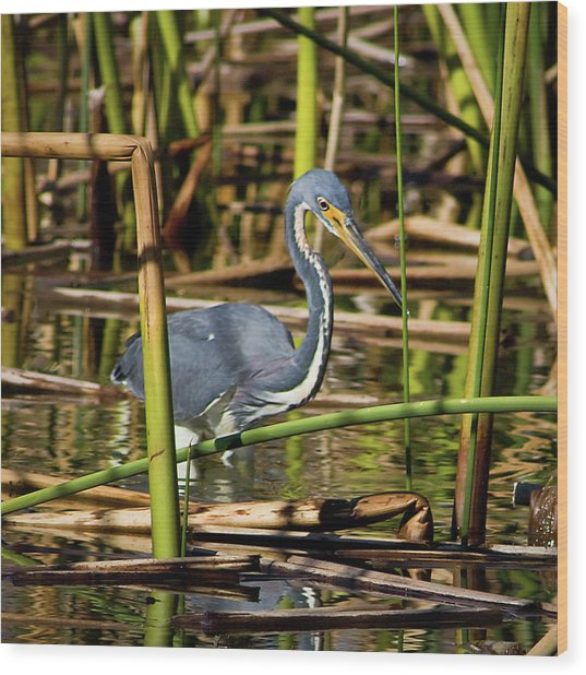 Wetlands Are My Home Wood Print by Dawn Currie