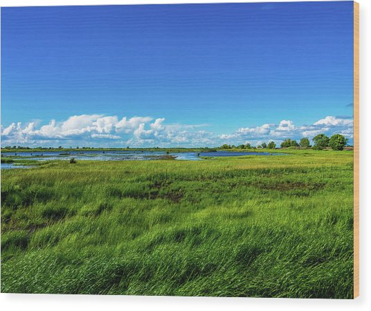 Wetlands On A Windy Spring Day Wood Print