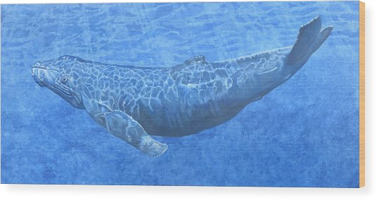 Whale In Surface Light Wood Print