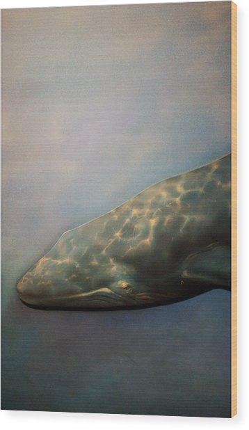 Whale Meet Again Wood Print by Jez C Self