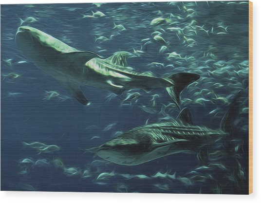 Whale Shark Couple Wood Print