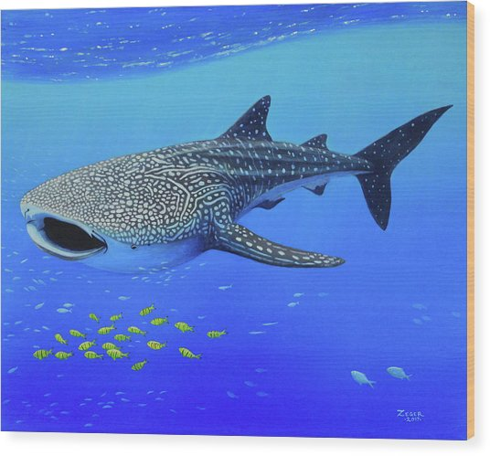 Whale Shark Wood Print by James Zeger