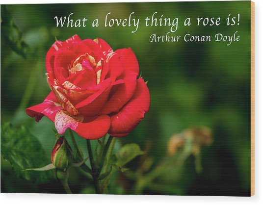 What A Lovely Thing A Rose Is Wood Print