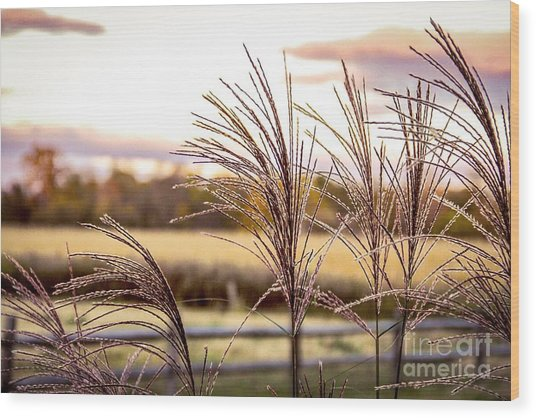 Wheat Sunset Wood Print by Keith Rousseau