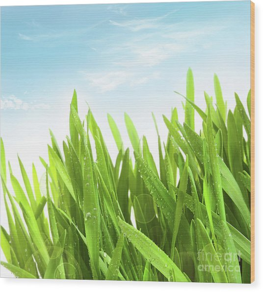 Wheatgrass Against A White Wood Print