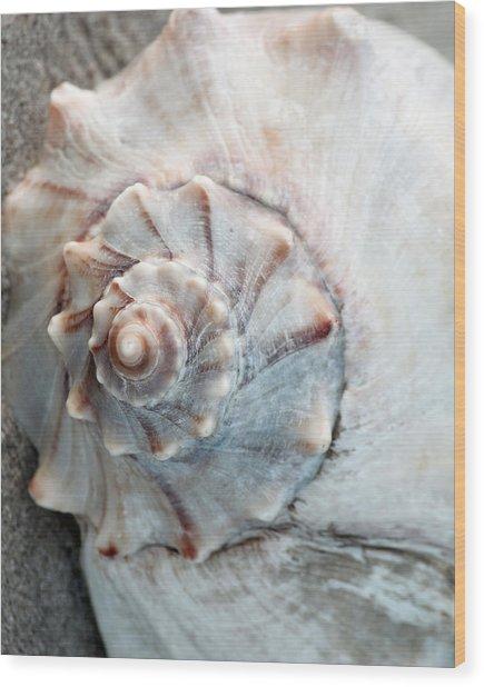 Whelk Wood Print