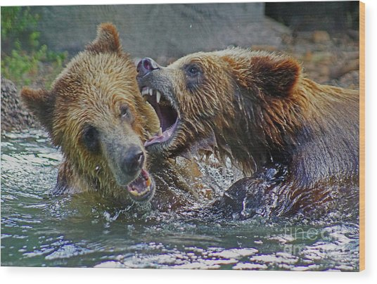 When Grizzlies Play Wood Print