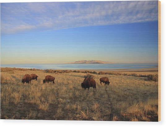 Where The Buffalo Roam Wood Print by Gene Praag