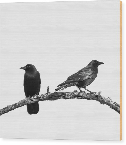 Which Way Two Black Crows On White Square Wood Print