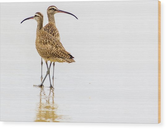 Whimbrel Sandpiper On The Beach Wood Print