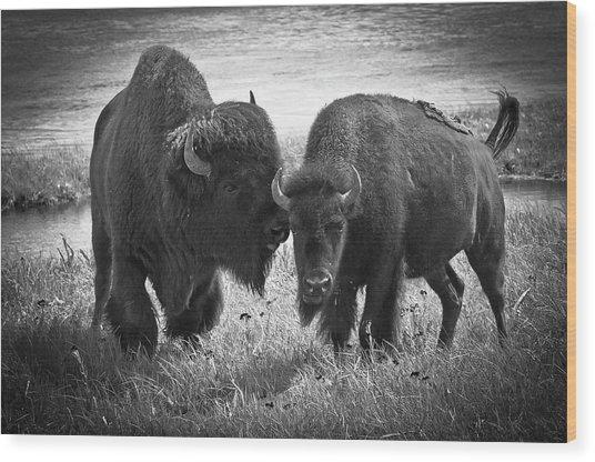 Whispering Bison Wood Print