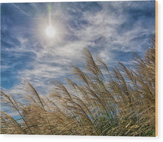 Whispering Grasses Wood Print