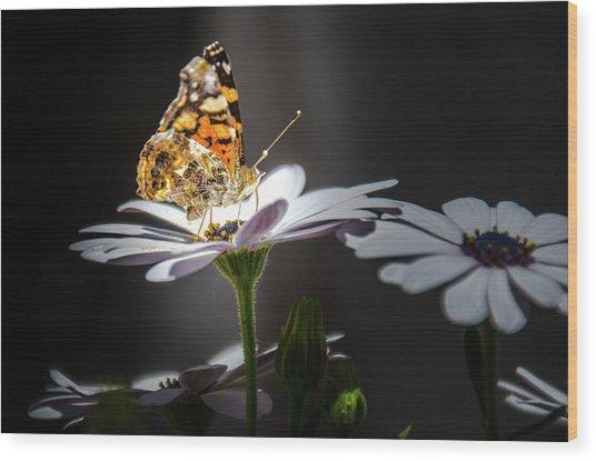 Whispering Wings II Wood Print