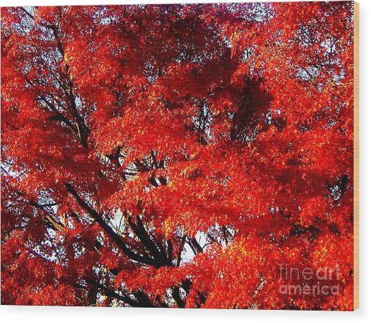 Whispers Of A Japanese Maple Wood Print by Juliette Carter-MarShall