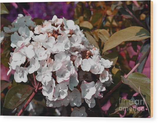 Wood Print featuring the painting White Abstract Flower B2516 by Mas Art Studio