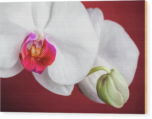 White And Red Orchids Wood Print