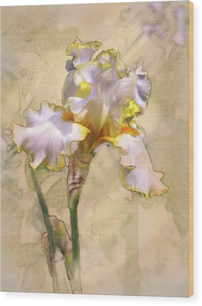 White And Yellow Iris Wood Print