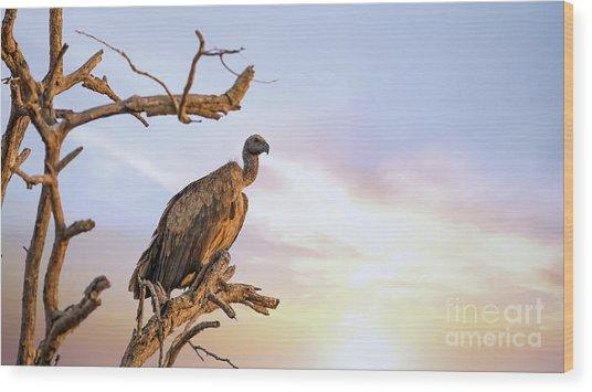 White-backed Vulture At Sunset In Kruger National Park Wood Print