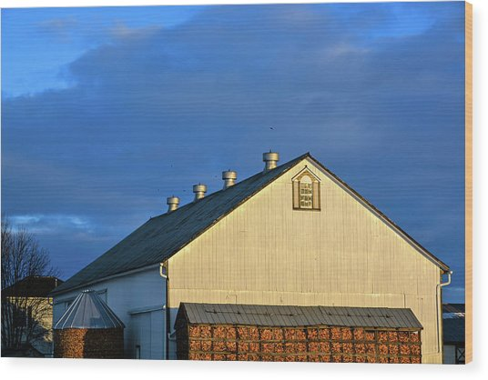 White Barn At Golden Hour Wood Print