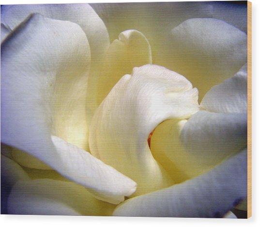 White Beauty Rose Wood Print