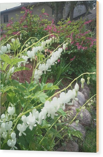 White Bleeding Heart Wood Print