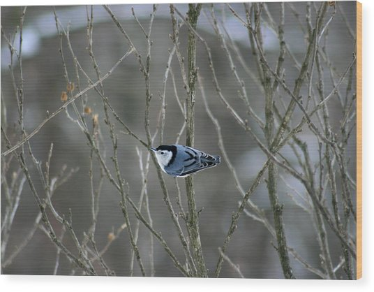 White Breasted Nuthatch 3 Wood Print by George Jones