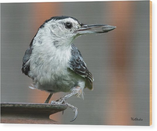 White-breasted Nuthatch With Sunflower Seed Wood Print
