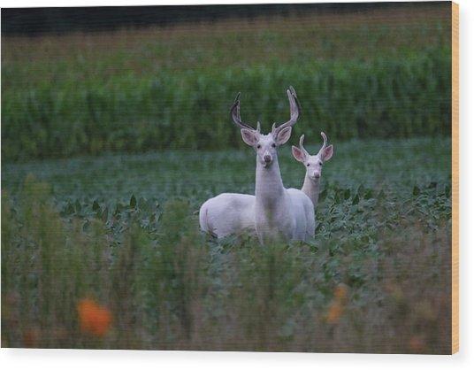 White Bucks Wood Print