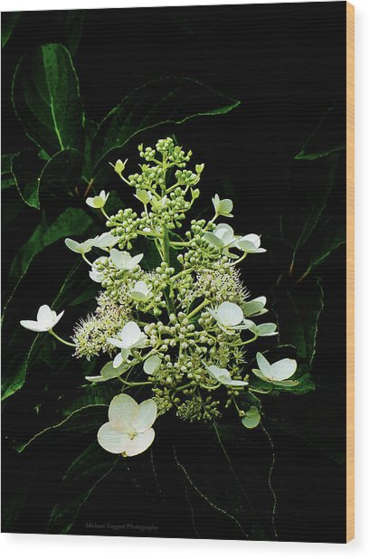 White Chandelier Wood Print by Michael Taggart II
