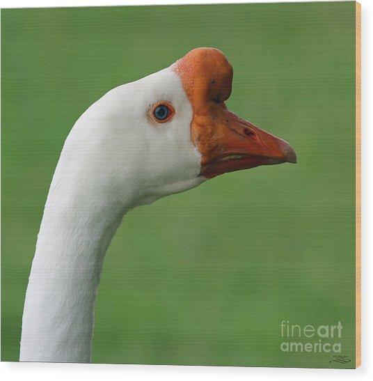 White Chinese Goose Wood Print