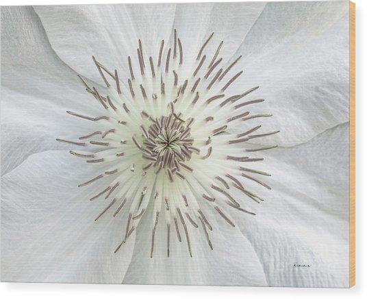 White Clematis Flower Garden 50121b Wood Print